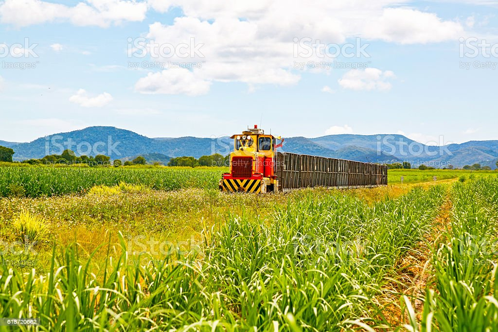 Small diesel locomotive hauling empty bins through sugar cane plantation stock photo