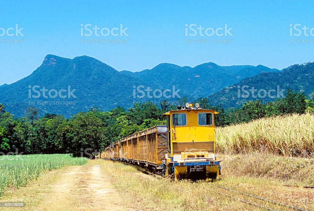 Small diesel locomotive with empty train in tropical sugar cane stock photo