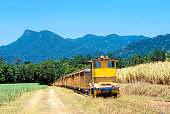 Small diesel locomotive with empty train in tropical sugar cane