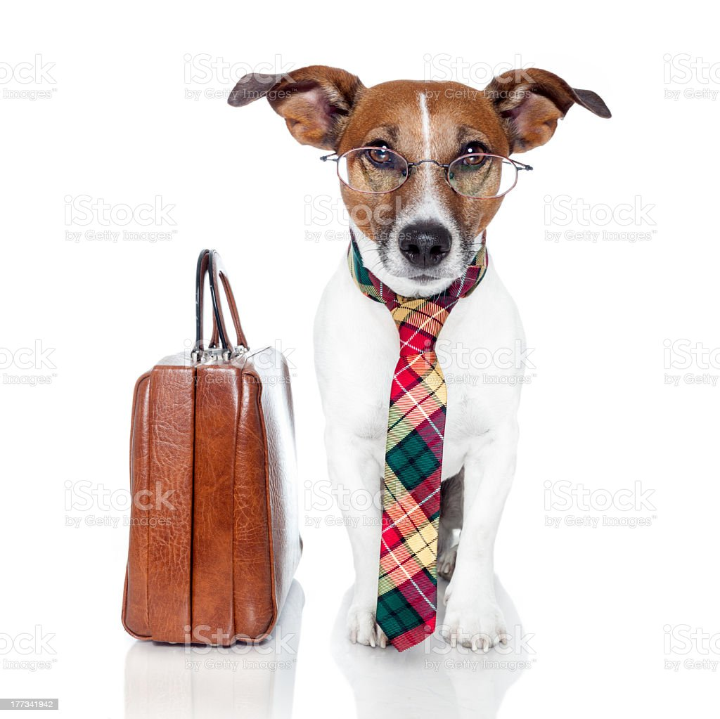 Small dog dressed for business with glasses and leather bag royalty-free stock photo