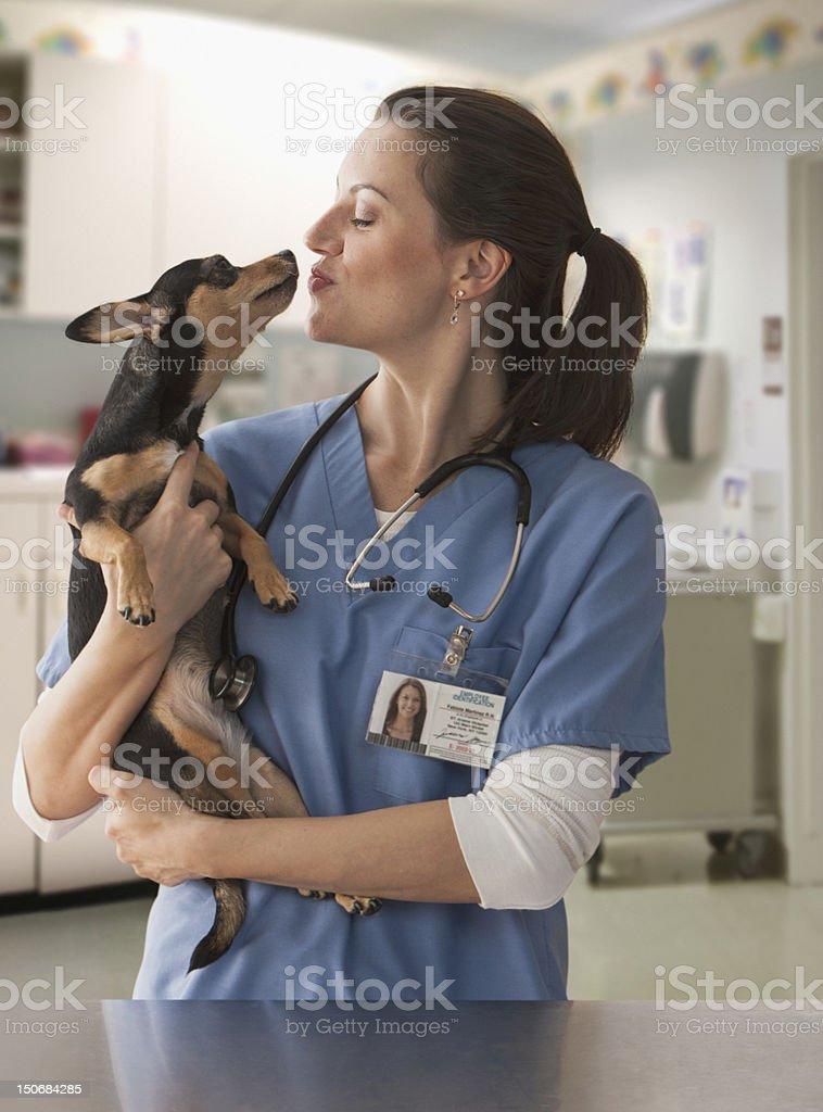 Small dog licking female veterinarian royalty-free stock photo