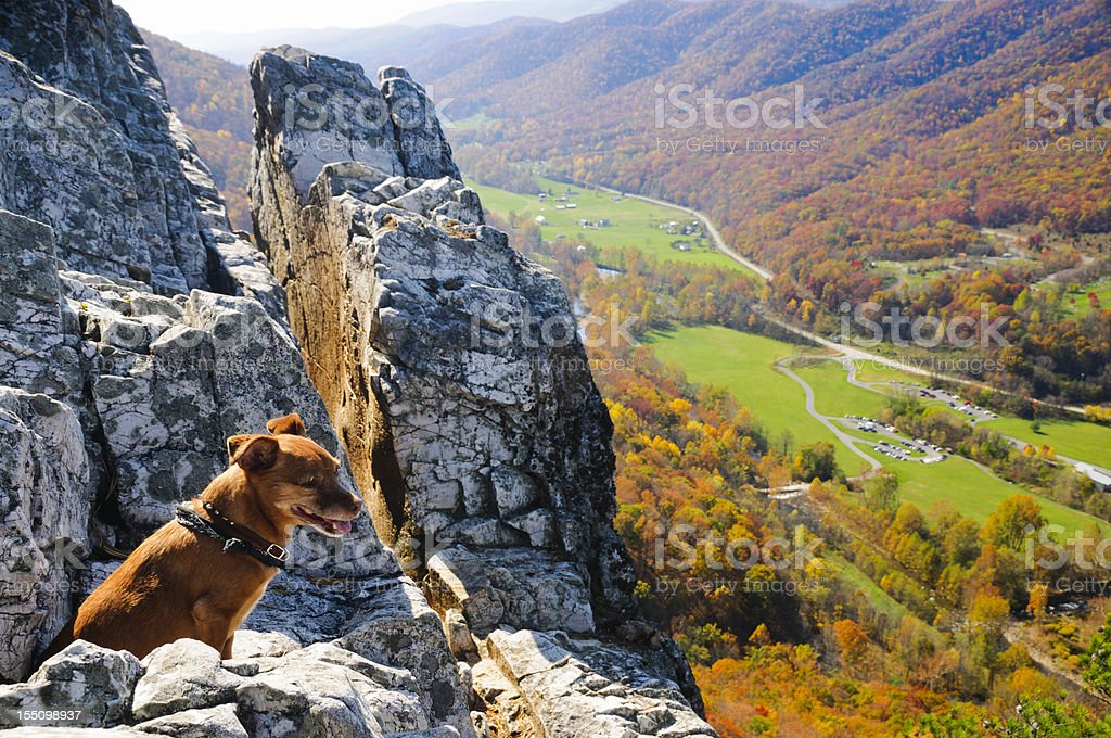 Small dog overlooking an autumn view. stock photo