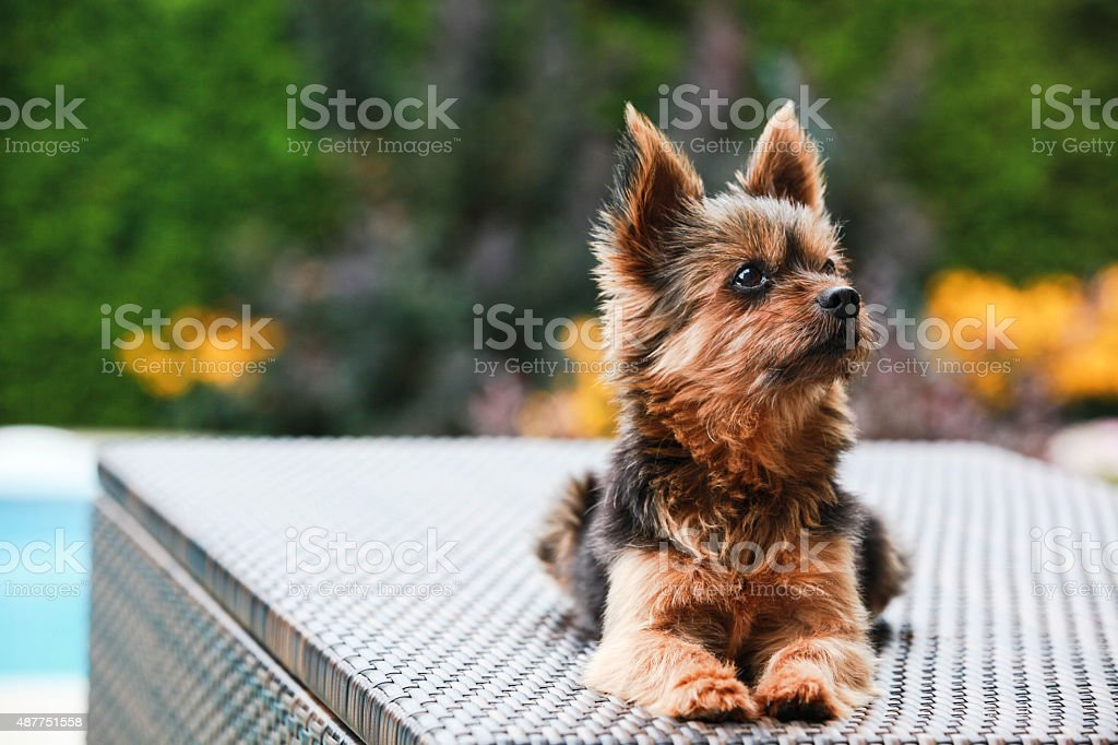 Small dog stock photo