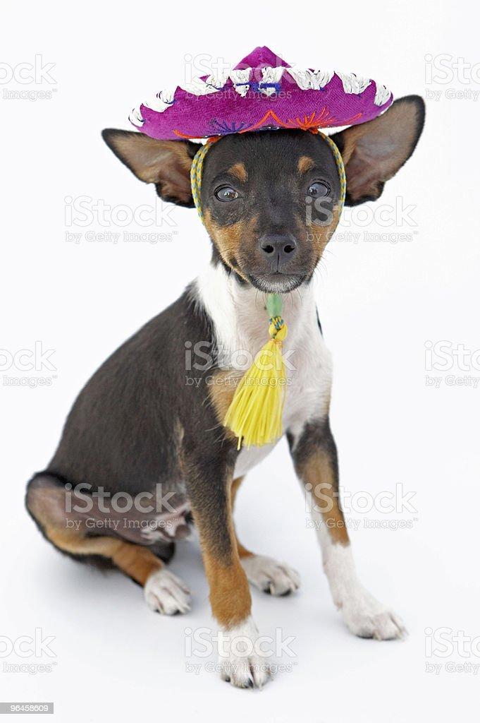 small dog royalty-free stock photo