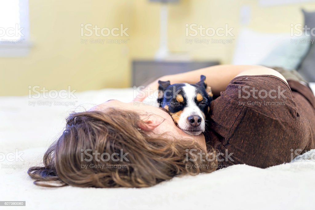 Small dog sleeping with his owner on the bed stock photo