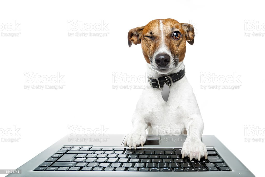 Small dog typing on computer keyboard royalty-free stock photo