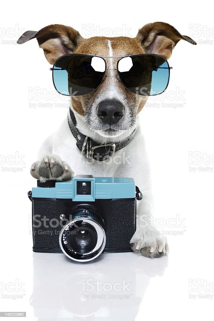 Small dog wearing sunglasses with its paw on a camera stock photo