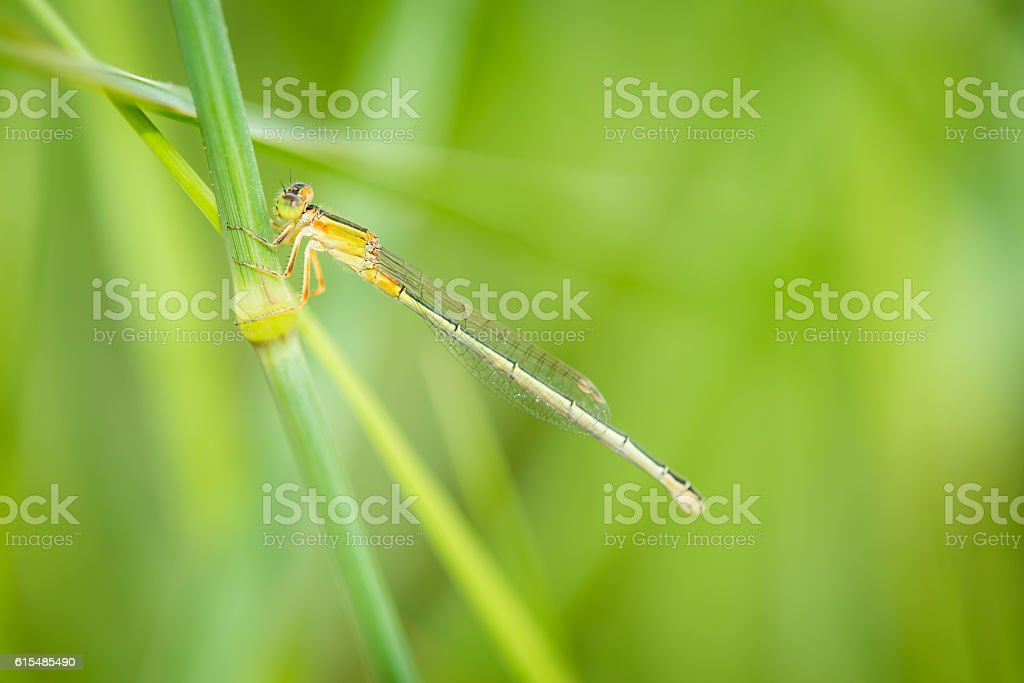Small dragonfly stock photo
