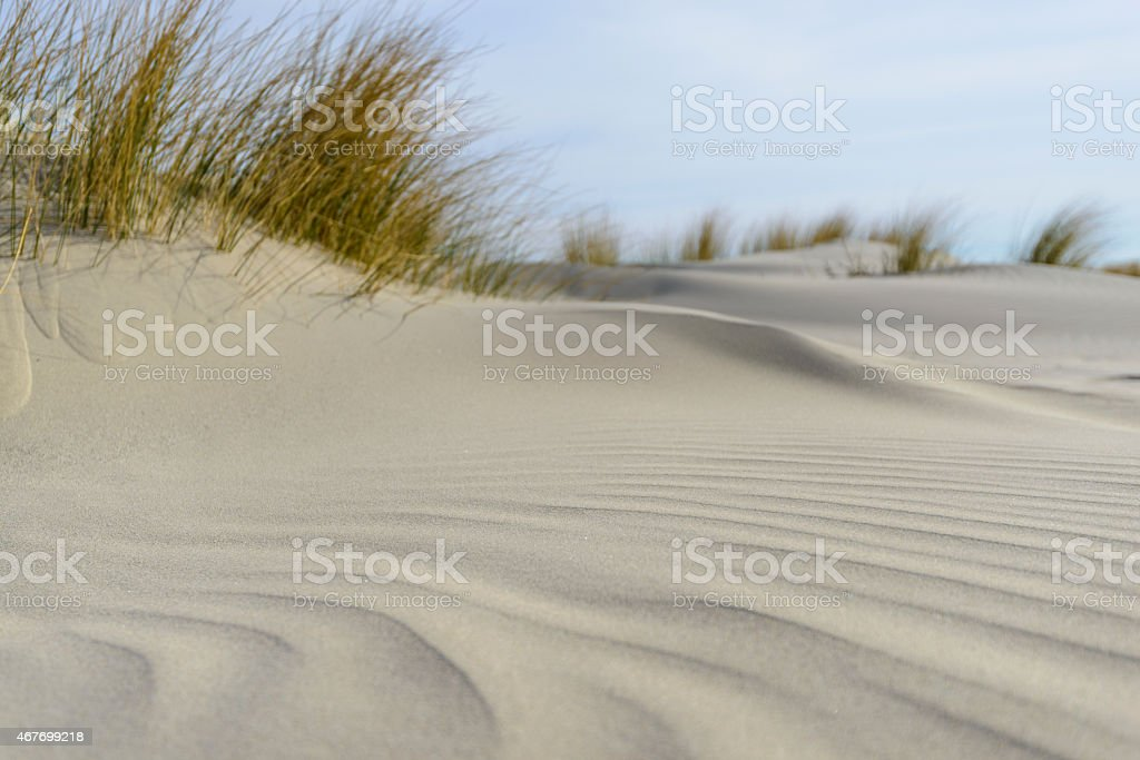 Small dunes at the beach stock photo