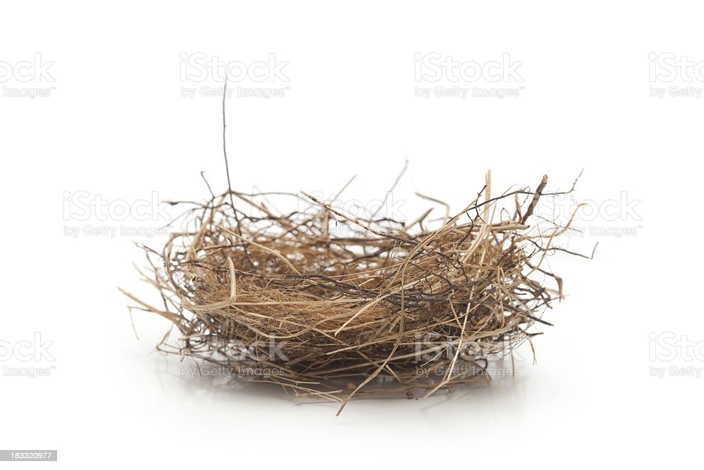 Small Empty Bird Nest Isolated on White stock photo