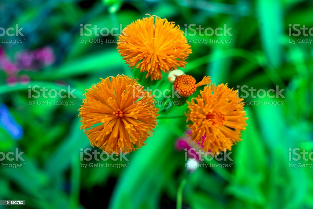 Small Exotic Flowers stock photo