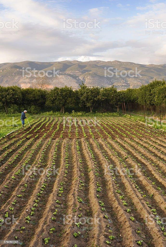 Small farm royalty-free stock photo