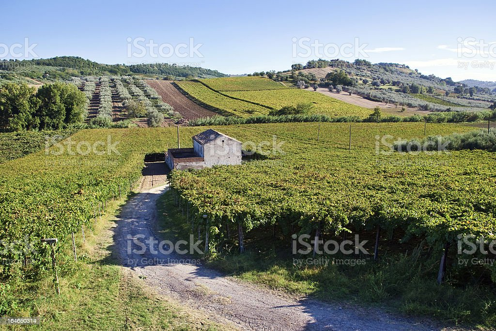 Small farmhouse in the middle of vineyards stock photo