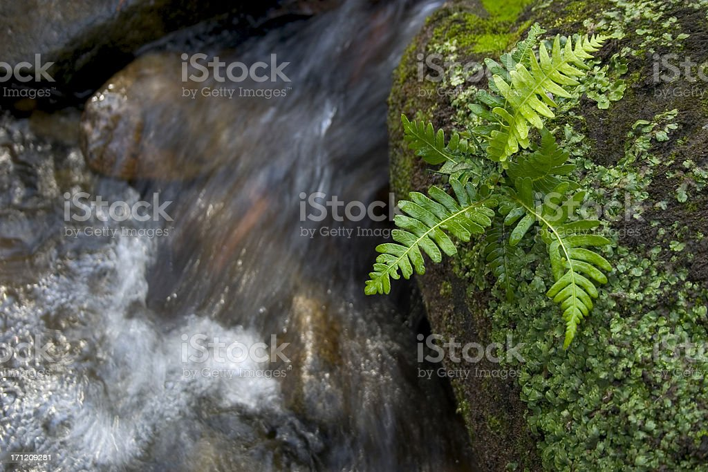 Small Fern and Creek royalty-free stock photo