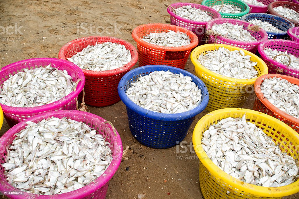 Small fish in colorful bucket stock photo