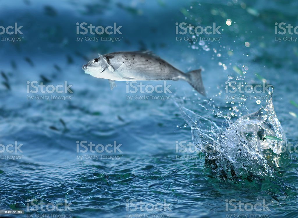 Small fish jumping out of water stock photo