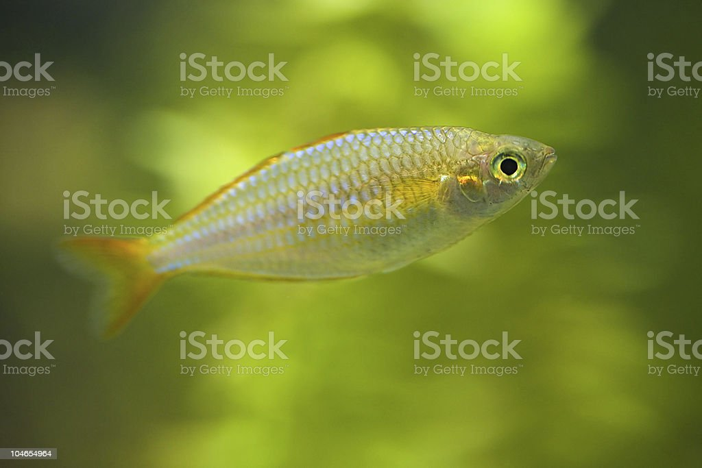 small fish on green background stock photo