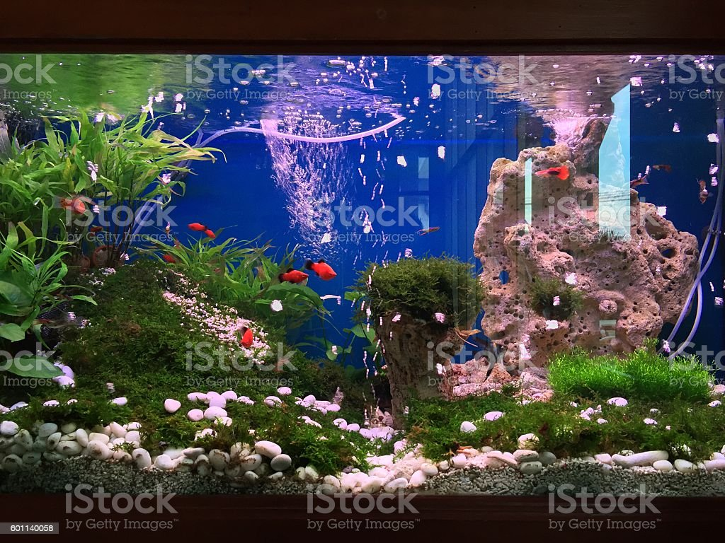 Small fish tank stock photo