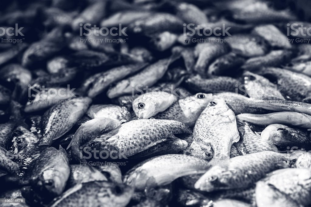 Small fishes from pond fishing stacked full frame toned blue stock photo