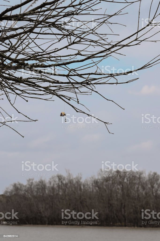 A small fishing bobber hangs from a tree. stock photo