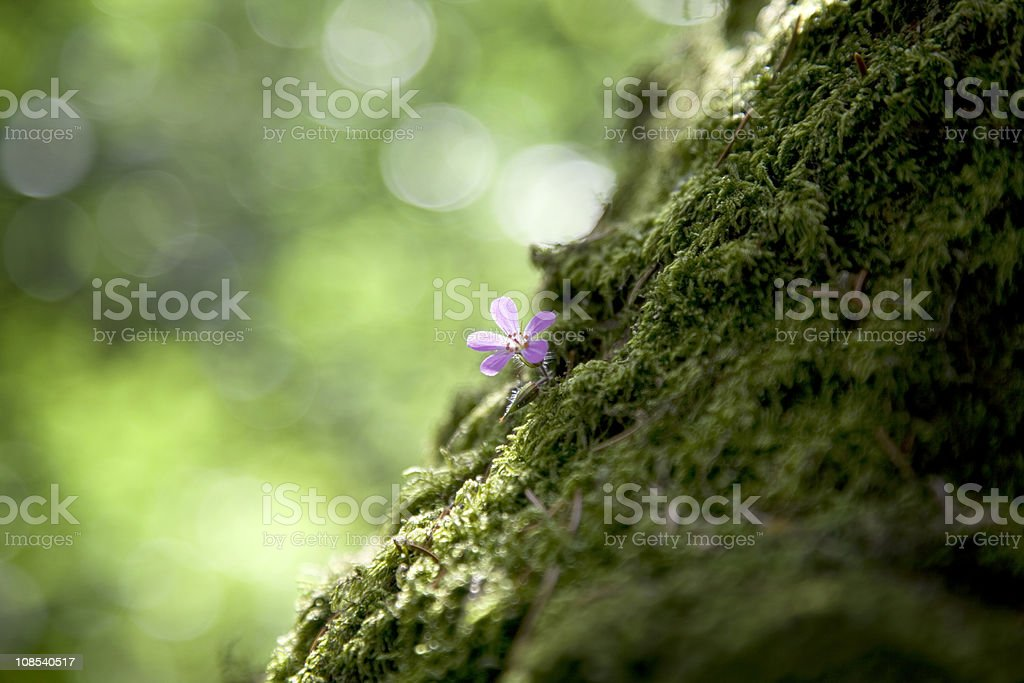 Small Flower Growing on Tree Trunk stock photo