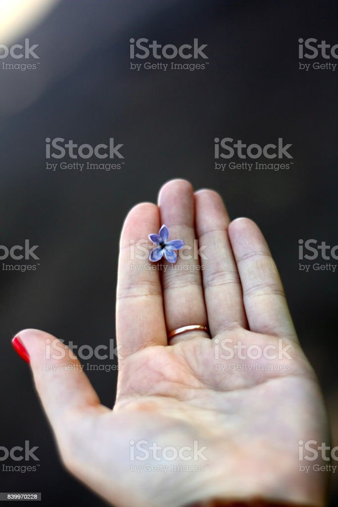 A small flower in a woman's hand stock photo