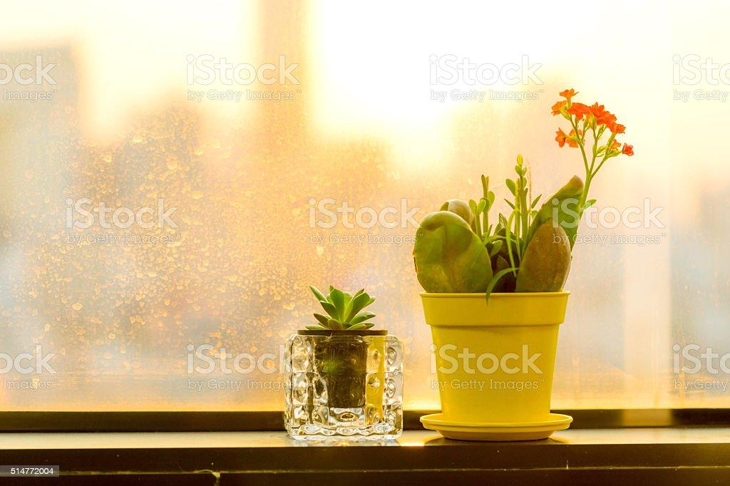 small flower near window stock photo