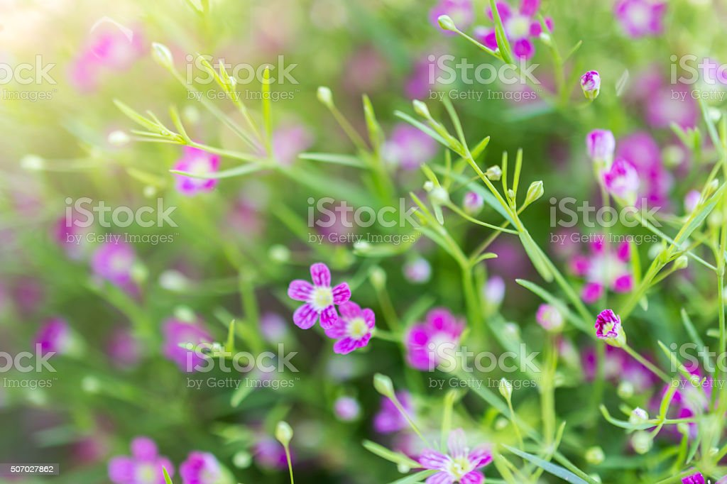 small flower stock photo