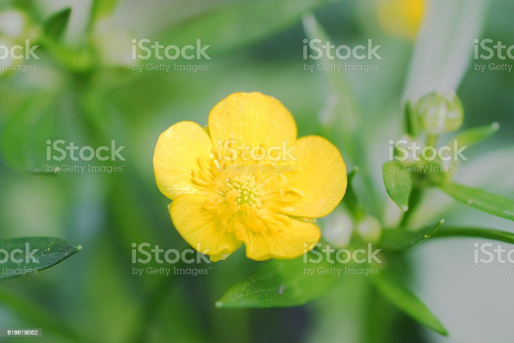 Small flower royalty-free stock photo