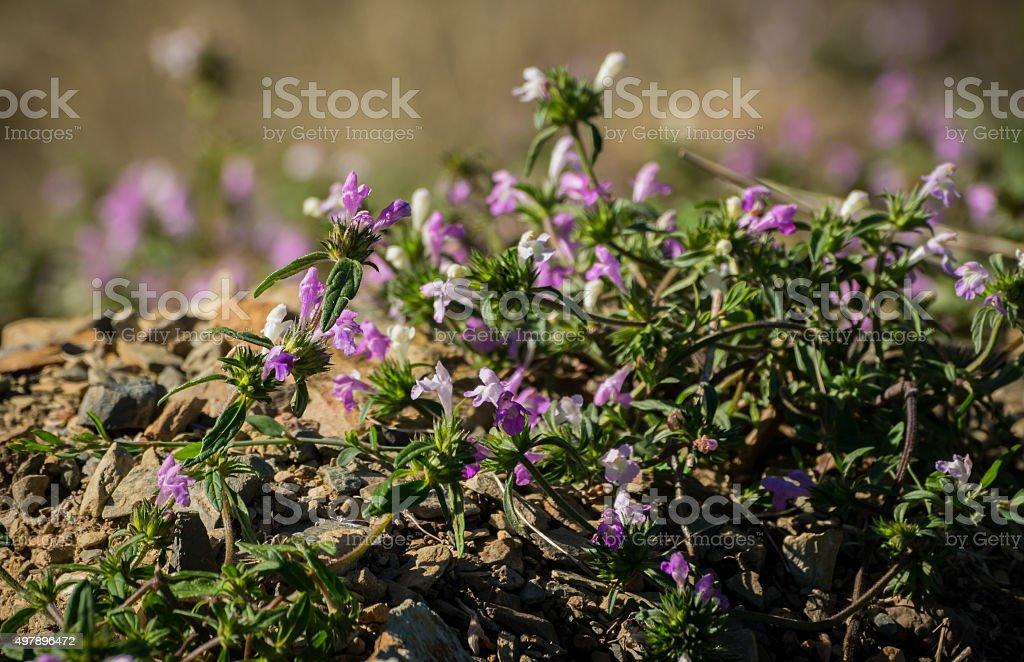 Small flower purple stock photo