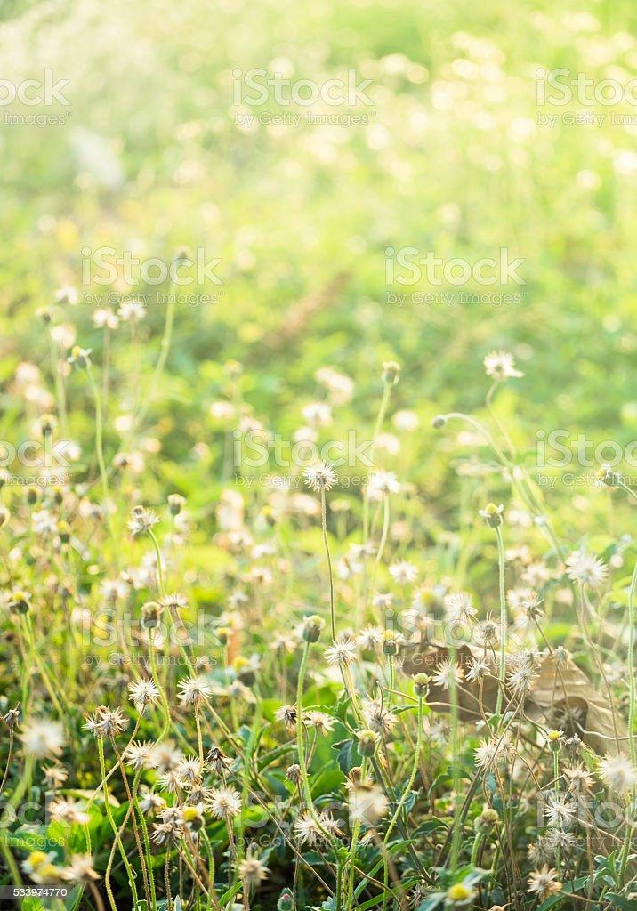 Small flower soft light green pattern stock photo