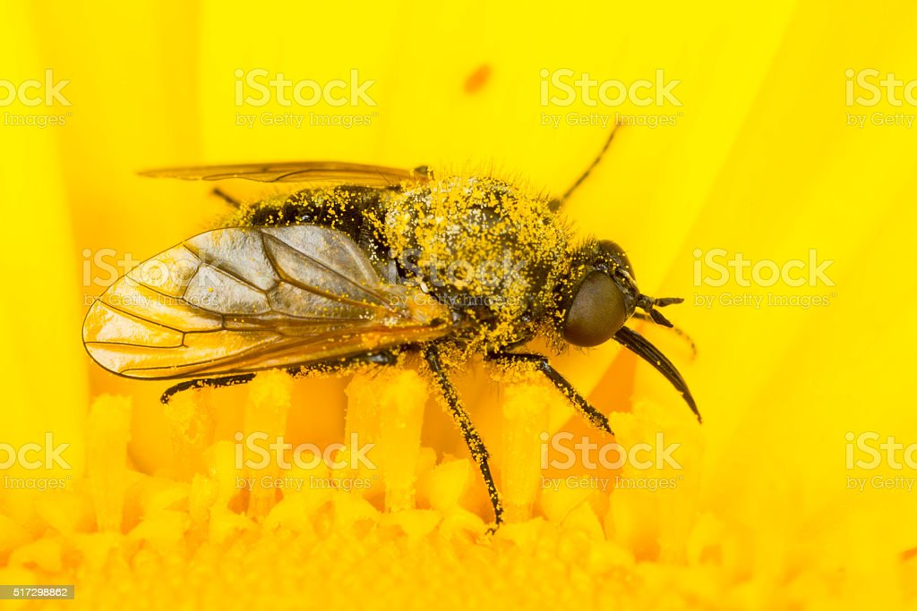 Small fly on a yellow flower stock photo