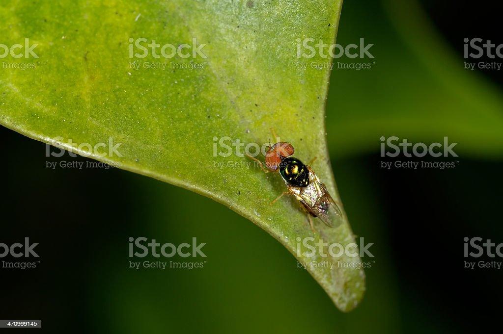Small fly royalty-free stock photo