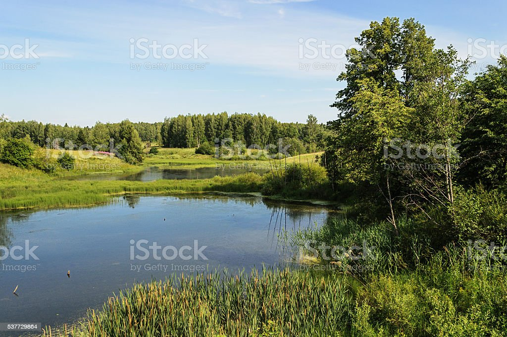 Small forest lake in summer stock photo