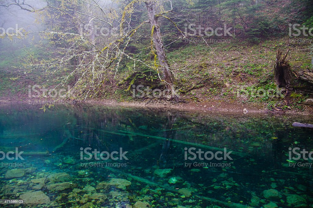 Small forest lake royalty-free stock photo