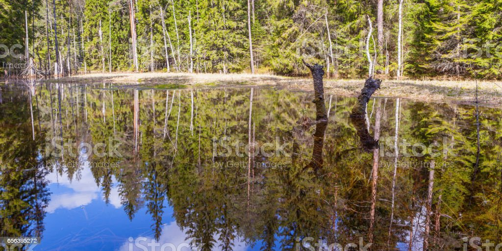 Small forest lake spring. stock photo