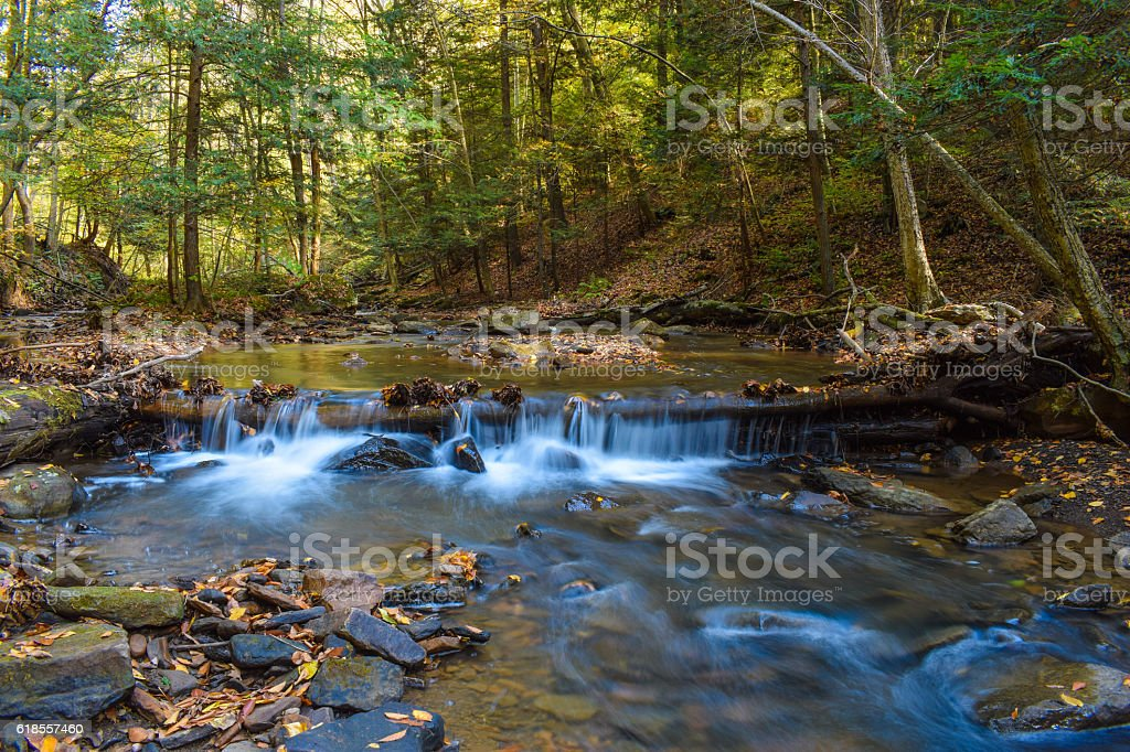 Small Forested Creek stock photo