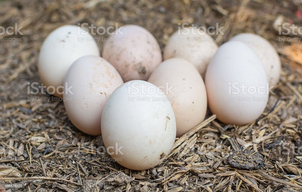 Small fresh  eggs on the ground stock photo