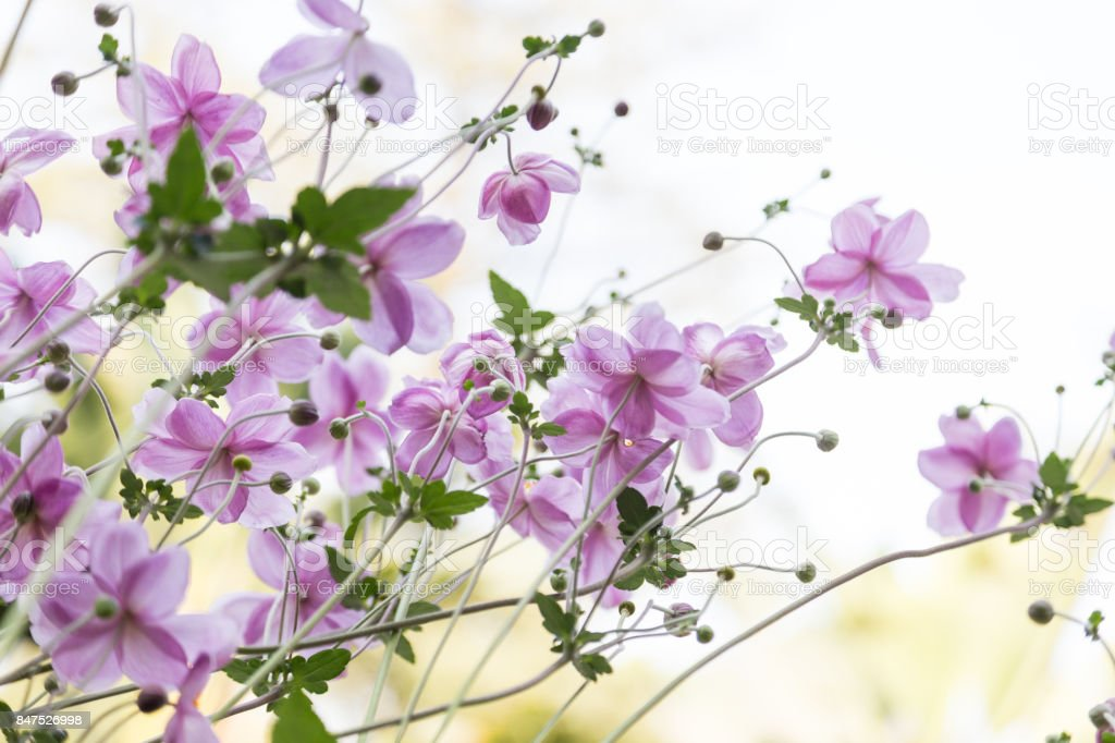 small fresh flower on plant in garden in sunny day stock photo
