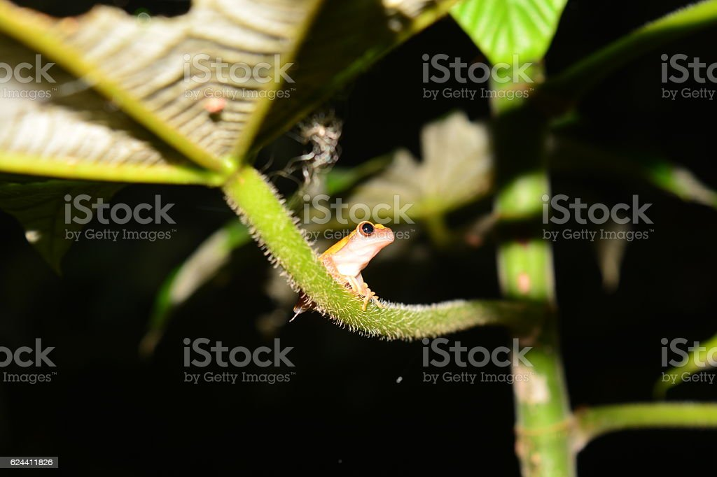 Small frog in the Amazon stock photo