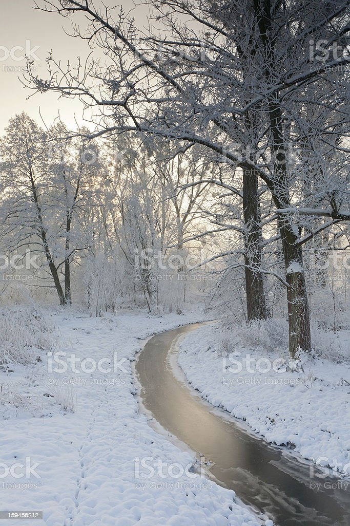 Small frozen river and trees in winter royalty-free stock photo