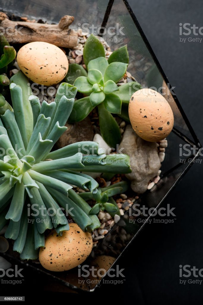 Small garden of succulent plants with easter eggs stock photo