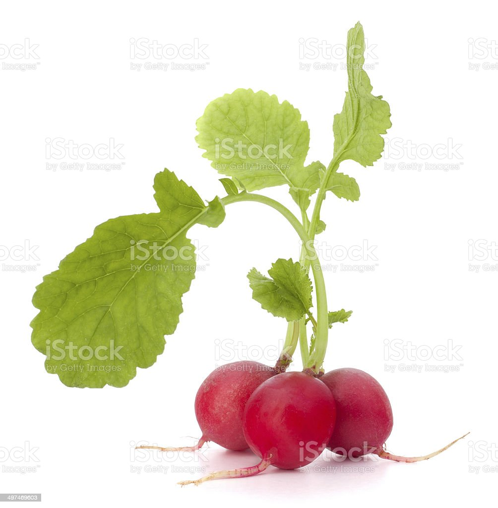 Small garden radish with leaves stock photo