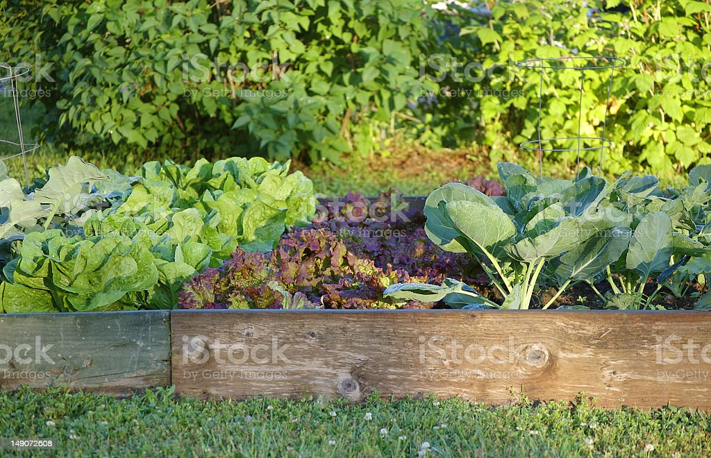 A small garden surrounded by wood detail royalty-free stock photo
