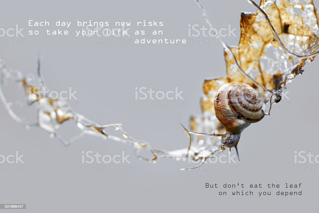 small gastropod is climbing in a dry leaf, sample text stock photo
