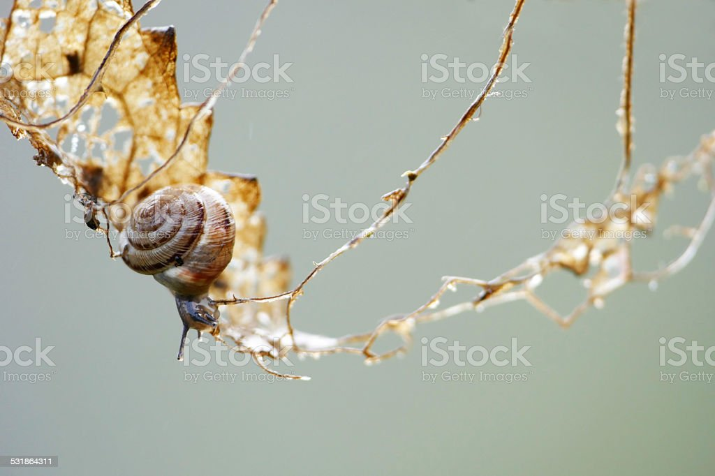 small gastropod on a climbing tour in a dry leaf stock photo