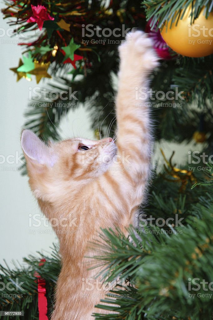 Small ginger kitten clawing at a bauble on a Christmas tree stock photo