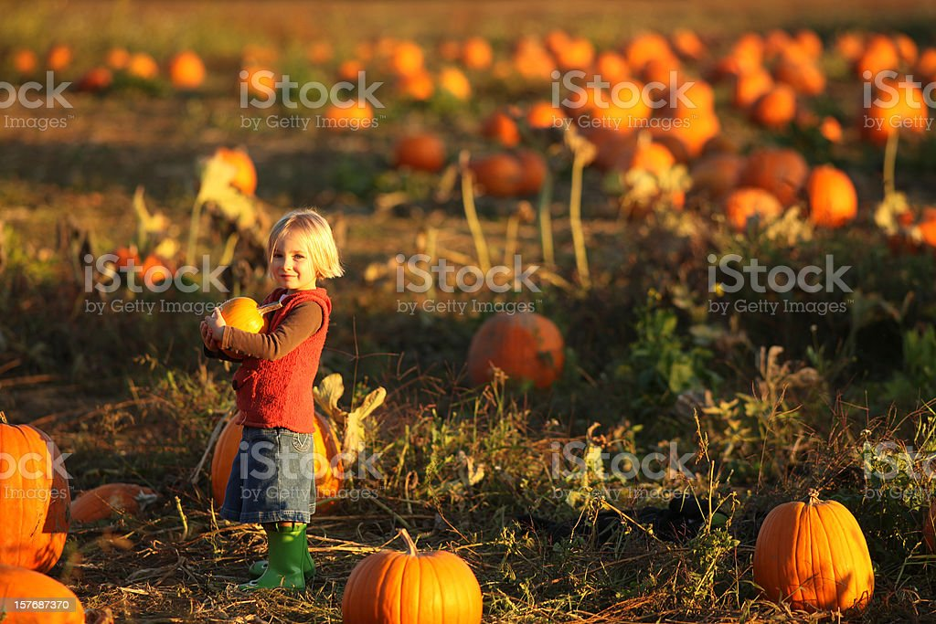 Small girl holding pumpkin in pumpkin patch royalty-free stock photo
