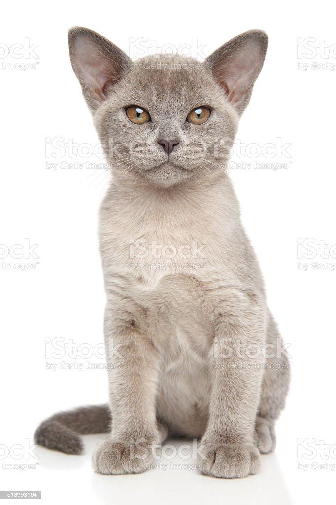 Small gray kitten on white stock photo