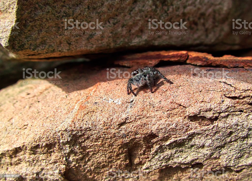 small gray spider royalty-free stock photo